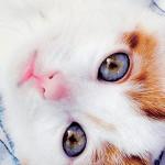Header Kitten